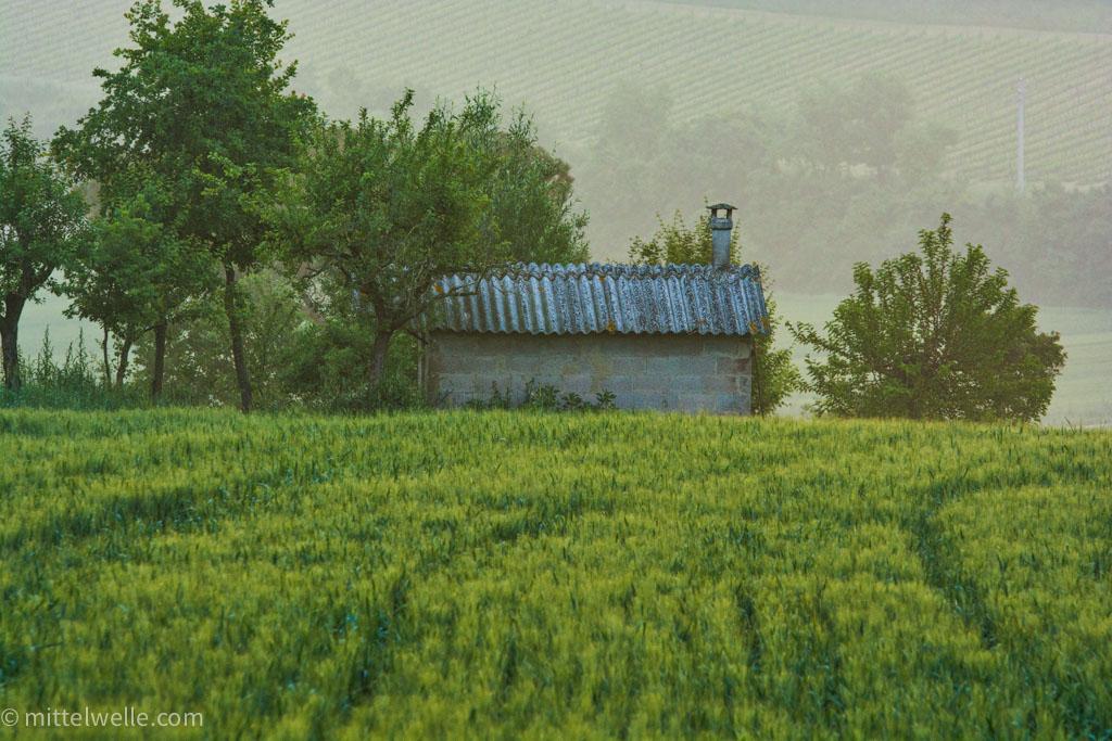 Feld in der Toskana mit Haus