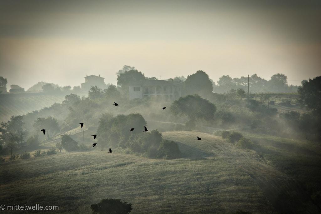 Vögel in der Toskana